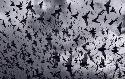 Дом жительницы Дании атаковали более 200 летучих мышей
