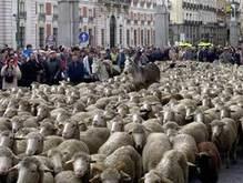 В Италии овцы заменили газонокосилки