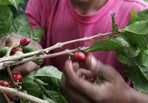 Мировые цены на кофе могут резко снизиться из-за рекордного урожая в Бразилии и Вьетнаме