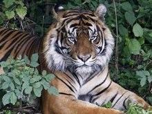Сон млекопитающих зависит от угроз и питания