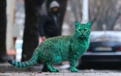 Інтернет схвилював зелений кіт