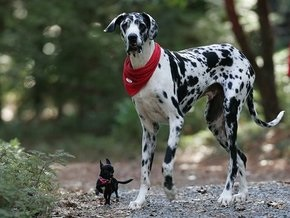 В США умерла самая высокая в мире собака