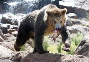 В Карпатах медведь напал на мужчину
