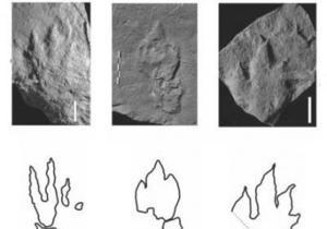 В Польше обнаружены следы первых динозавров