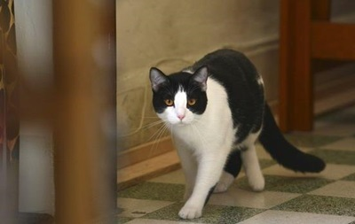 У США за вбивство кота чоловіка засудили до двох років в язниці
