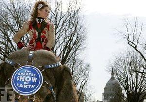 Стадо слонов прошлось по главным улицам Вашингтона