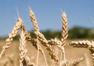 Аграрный фонд выступает за рыночные цены на зерно