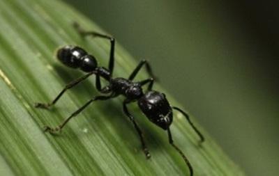Ученые нашли муравьиные туалеты