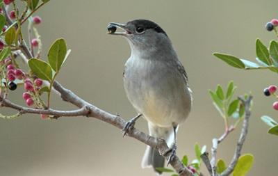 Понад два мільйони птахів вбили на Кіпрі за два місяці