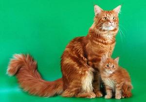 В Австрии похитители вернули прожорливого кота хозяевам