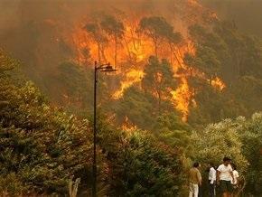 Экологи: глобальное потепление уменьшит количество лесных пожаров