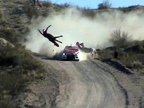 На Аргентинской ралли гонщик сбил дикую лошадь