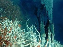 Ученые: Морские глубины скрывали эффективный антибиотик