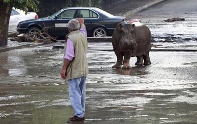 Наводнение в Грузии: по улицам плавают крокодилы и ходят бегемоты