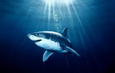 Большой улов: Форвард МЮ Робин ван Перси поймал акулу на рыбалке