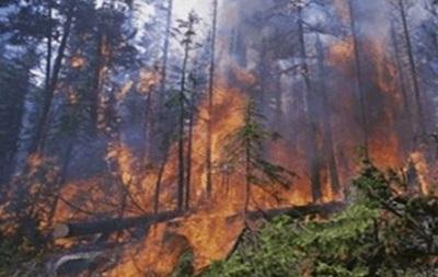 На Луганщине из-за обстрелов сгорело 15 гектаров леса