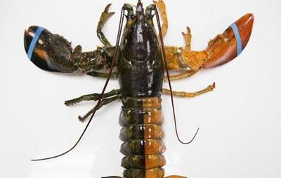 В США нашли редкого двухцветного омара