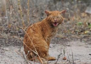 Экологи просят москвичей подкармливать бездомных животных  во время жары