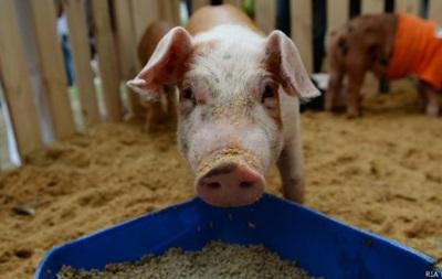 В России санкционные продукты предлагают отдать на корм скоту