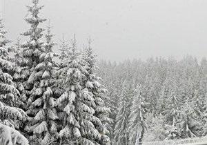В лесу Ивано-Франковской области нашли труп мужчины, который пошел за елкой и не вернулся