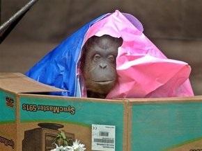 Животные столичного зоопарка получили подарки от посетителей