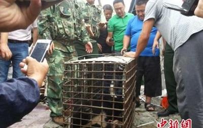 Сбежавший из России медведь вызвал панику в китайском городе