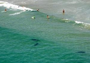 В Австралии серфер погиб в результате нападения акулы