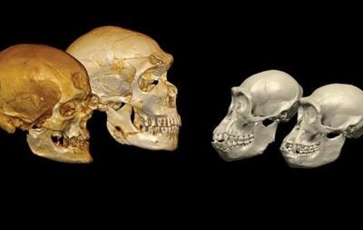 Ученые расшифровали ДНК человека возрастом 400 тысяч лет