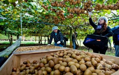 Беларусь стала главным поставщиком киви в Россию