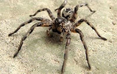 У Запорізькій області чоловік помер від укусу павука