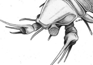 Новости науки - Джонни Депп: Древнего омара назвали в честь Джонни Деппа