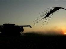 В Украине собрано зерна уже на 80% больше, чем в предыдущем году