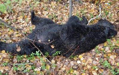 Медведь и охотник убили друг друга