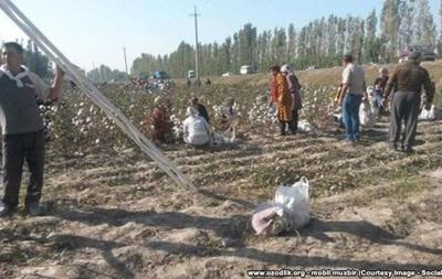 Жителей Узбекистана заставили приклеивать назад собранный хлопок