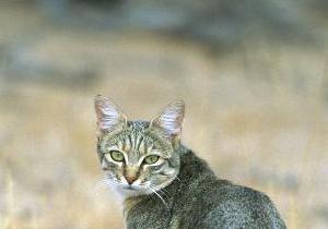 В Великобритании живет самая старая кошка в мире