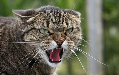 В Херсонской области на детей напал бешеный кот
