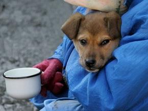 Киевский приют призывает горожан делать благотворительные взносы на стерилизацию бездомных животных