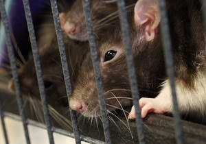 Европейский суд приобщил к делу Тимошенко свидетельства о тараканах и крысах в СИЗО