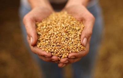 США повысили прогноз экспорта пшеницы из Украины