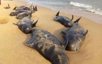 100 дельфинов выбросились на берег в Индии