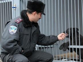Фотогалерея: Милиция с собаками