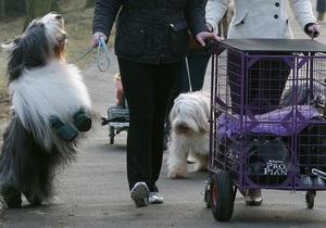 Жителям китайского города запретили держать дома собак
