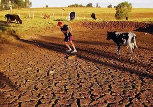 На северо-востоке Бразилии из-за засухи режим ЧС объявлен в 137 городах