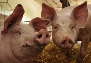В Ровенской области будут тщательней проверять мясную продукцию из-за вступления Беларуси в ТС