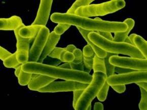 Украина заняла второе место в Европе по заболеваемости туберкулезом