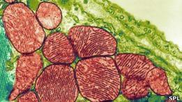 Ученые используют кожу для восстановления сердца