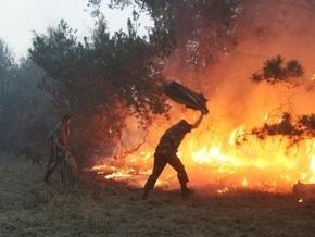 В Днепропетровской области горело 43 гектара леса