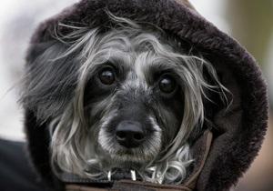 Исследование: Собаки умеют различать однояйцевых близнецов лучше ДНК-тестов