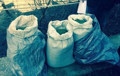 На Дніпропетровщині вилучили марихуани на мільйон гривень