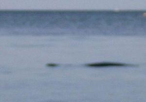 В водах Ла-Манша британцы обнаружили новое Лохнесское чудовище